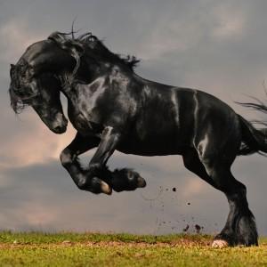 black-stallion-wallpaper